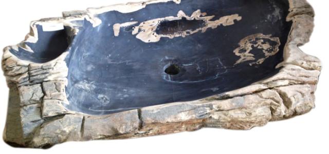 tronchi-fossili1