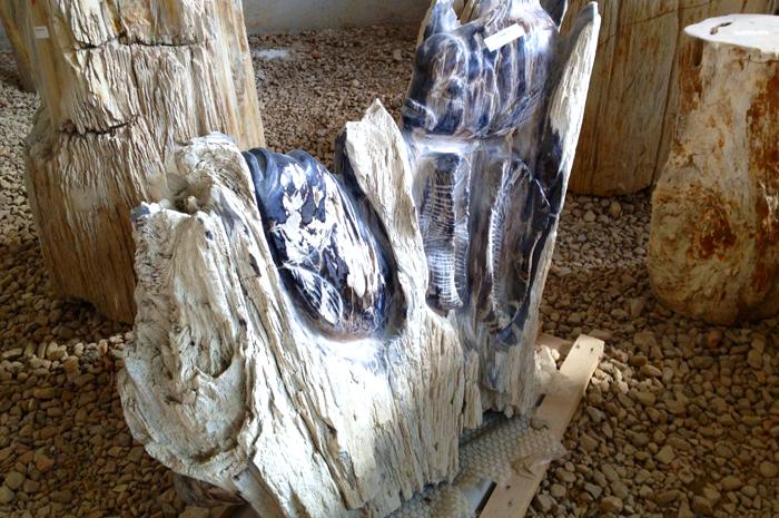 tronchi-fossili3