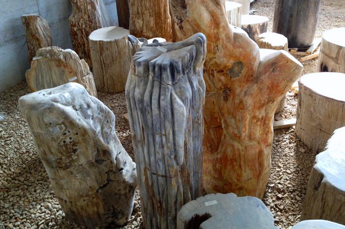 tronchi-fossili5